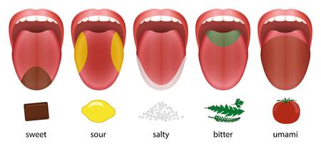 Taste Categories